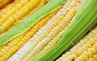 Így használd a kukoricát a szervezeted hűtésére kánikulában